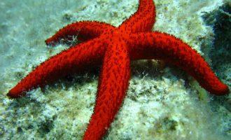 дайвинг, морская звезда