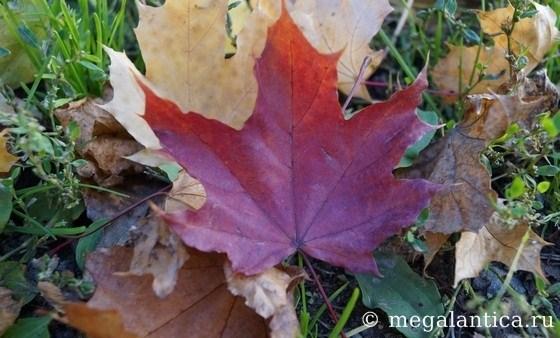 Осень: романтика парка для прогулок влюбленных