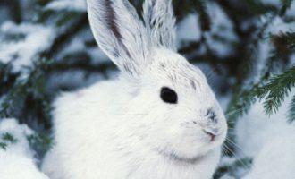 Зимняя охота на зайцев