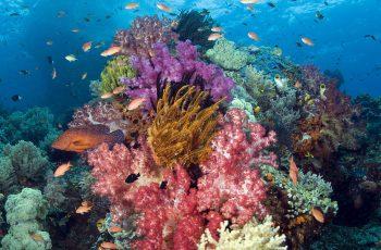 Коралл: полезные свойства