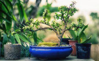Создание садов в миниатюре
