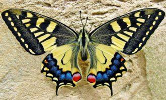 Разведение и продажа бабочек