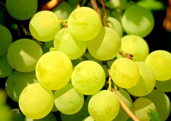 Пряный маринованный виноград